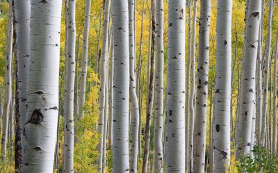 Saving money with bare-root trees and shrubs