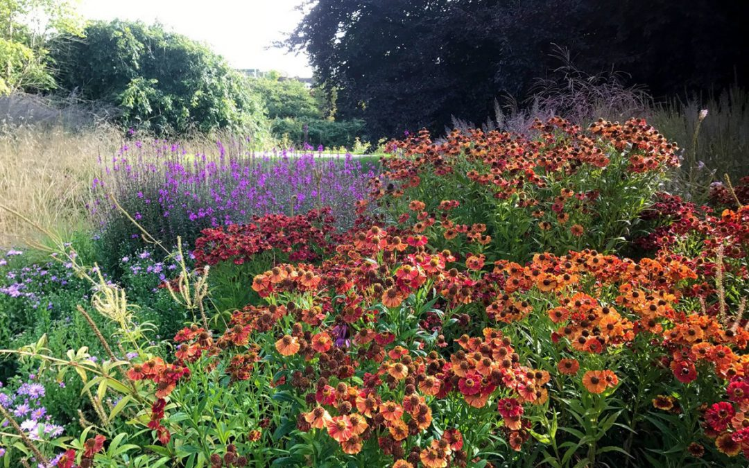Prairie-Style Planting at Trentham Gardens
