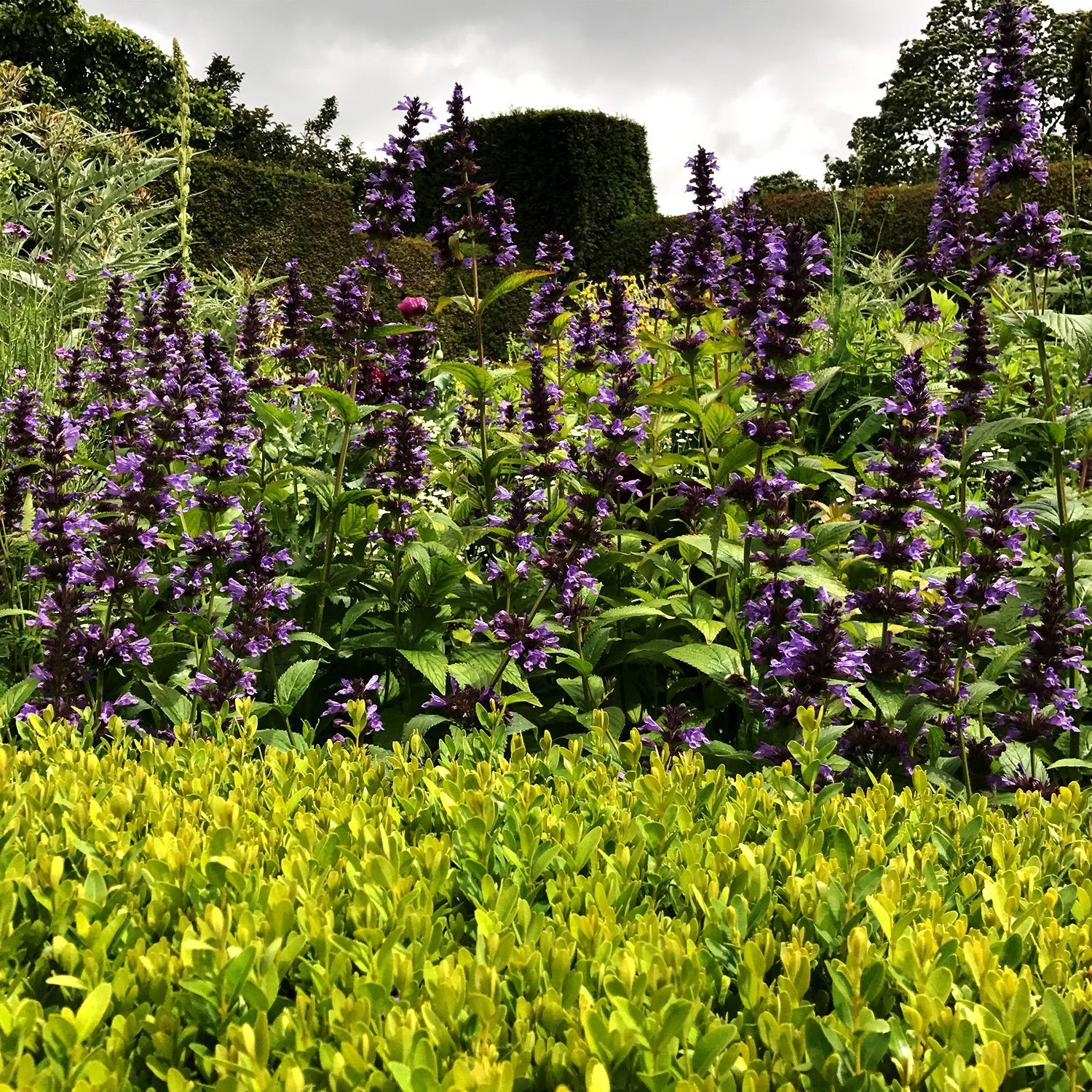 Great Dixter Colourful Planting